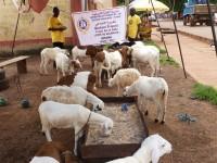 Ghana Qurbani Human Relief Foundation